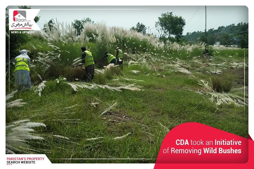 CDA took an Initiative of Removing Wild Bushes