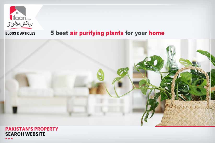 5 best air purifying plants for your home