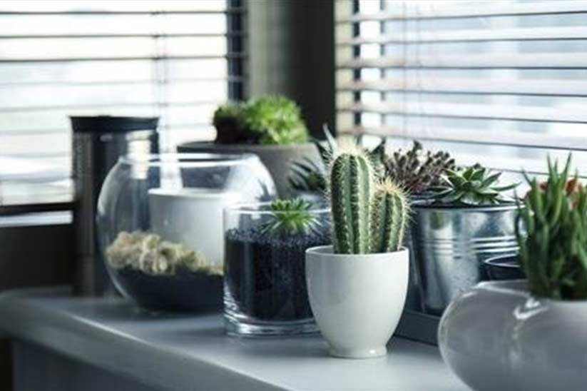 How Houseplants are One of the Top Most Choices for Home Decor