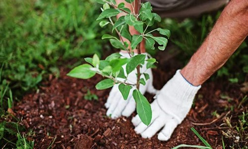 Monsoon Tree Plantation Campaign Launched in Kohat and Swabi