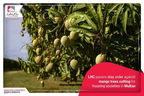 LHC passes stay order against mango trees cutting for housing societies in Multan