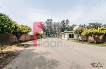 2 Kanal House for Rent (First Floor) in Doctors Housing Society, Lahore